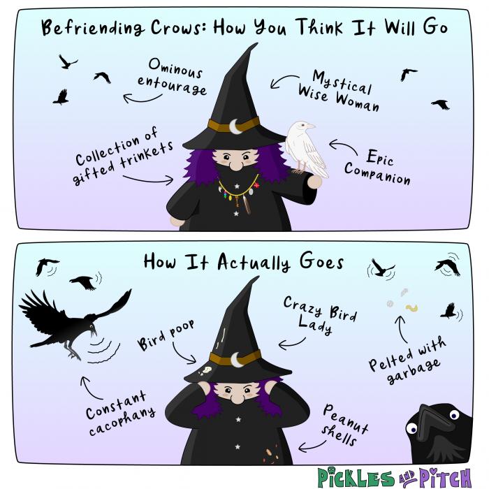 Befriending Crows