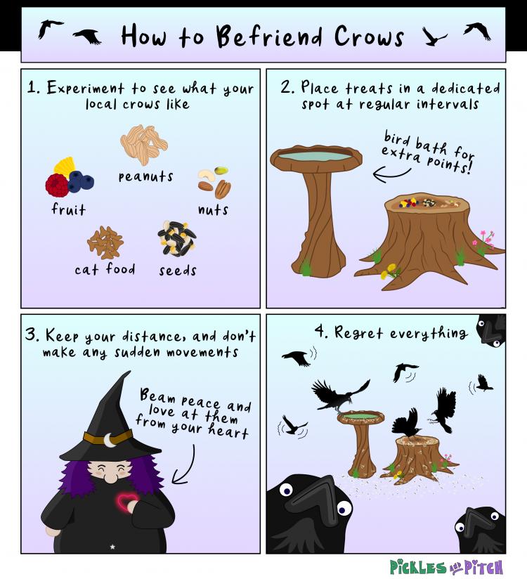 Befriending Crows Part Two